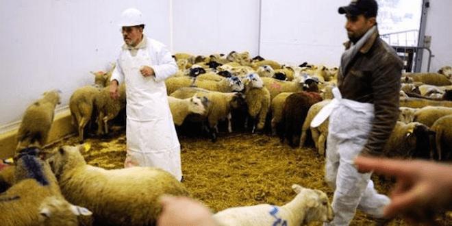 Intox islamophobes, Des intox islamophobes pour l'Aïd