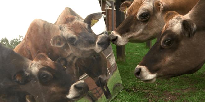 Giesbert a réalisé un documentaire à charge sur la viande.