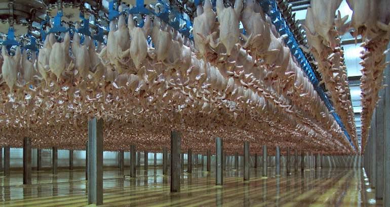 Du poulet brésilien pas très halal