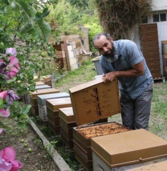, Amor Kaabia, l'amour des abeilles, de la Tunisie à Trappes